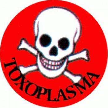TOXOPLASMA - Skull